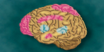 cerveau méditation